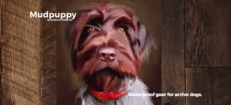 leather dog collars and custom dog