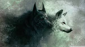 best 40 wolf hd desktop wallpaper on