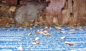 30+ Arrow Termite Inspection  Gif