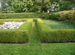 Boxwoods To Go Along The Fence House Landscape Hedges Herb Garden