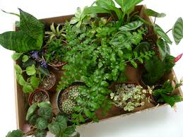 how to make your own green terrarium to
