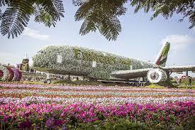 hd wallpaper miracle garden dubai