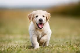 my dogs hd wallpapers new tab theme
