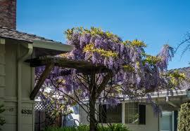 california ca flowers blue chimney