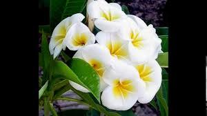 صور اجمل انواع الورود Youtube