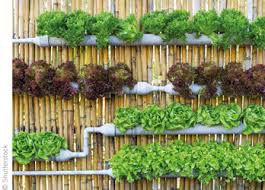 vertical farms help solve safety issues