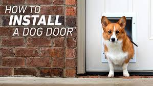Install A Pet Door