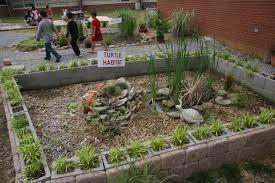 Outdoor Learning Station Box Turtle Habitat Awf