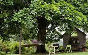 nice shades 7 fast growing shade trees