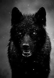 black wolf wallpaper 2monwd9