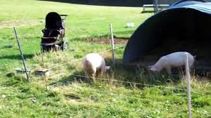 Top Animals Get Shocked By Electric Fence Video Dailymotion