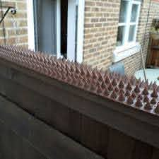 Fence Wall Spikes 20 Mts Cat Bird Repellent Intruder Deterrent Anti Climb Ebay