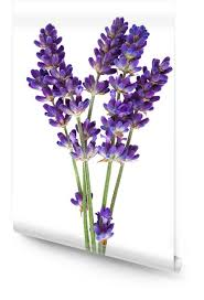 lavender wallpaper roll pixers we