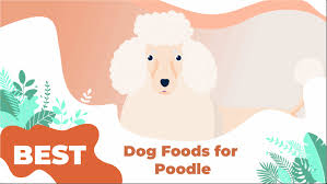 the 5 best dog food for poodles in 2020