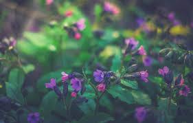 wallpaper flowers nature irina joanne