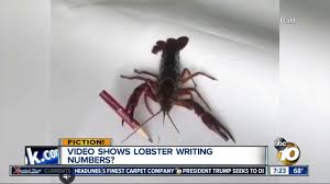 Video shows lobster writing numbers ...