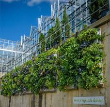 vertical gardening with livewall