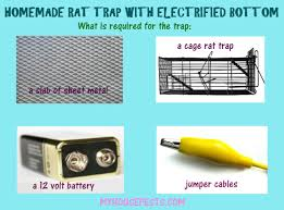 homemade rat trap is easy to make and
