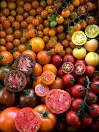 the secret to growing tomatoes in el paso