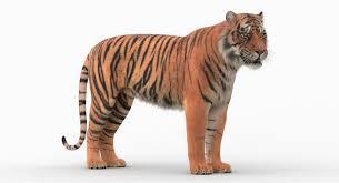 Tiger 3D Model on Behance