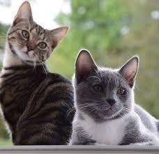 Il 17 febbraio è la Festa del Gatto!
