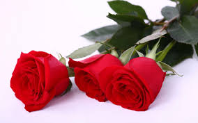 awesome love rose flower images free