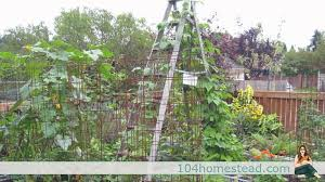 Low Cost No Cost Garden Trellis Ideas