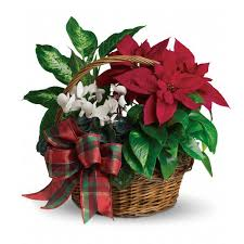 Holiday Poinsettia Basket - Poinsettia Specials | Buy online at Bloomex.ca