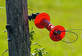 Free Images Tree Branch Bird Post Leaf Flower Wire Pile Red Metal Gate Goal Handle Opening Voltage Pasture Fence Rope Tensioner Insulator Electric Fence Steel Tension Spring 3721x2530 790800