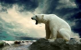 polar bear wallpaper hd picserio