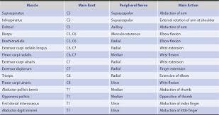 motor disorders neupsy key
