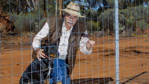 Wild Dog Proof Cell Fence Work Starts In Goldfields Countryman