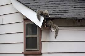 how to get squirrels out of the attic