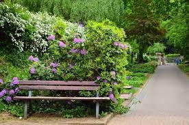 bench lilac shrub tree flower