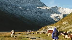 tour du mont blanc tmb walking