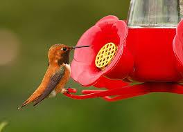 a homemade hummingbird nectar recipe