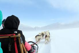 Dog-sledding outfitter in southern Colorado exclusively uses ...