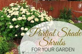partial shade shrubs for your garden