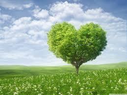 love tree 4k hd desktop wallpaper for