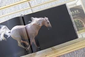 horse human an emotional bond