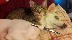 صور قطط مضحكة صور مواقف طريفه للقطط صور جميلة