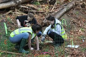 Miriam Gold, Ava Wilson and Elena Sta. Maria planting. - My ...