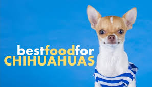 best dog food for chihuahuas and which
