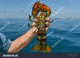 On Lobster Boat Fishermans Arm Holding ...