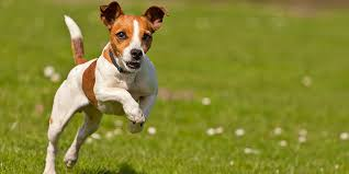 Сім порід собак, ідеальних для утримання