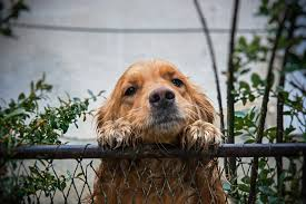 How To Stop Your Dog Digging Under The Fence Petbooktoday