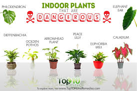 10 indoor plants that are poisonous and
