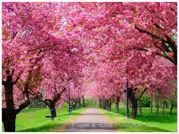 صور ربيع للتصميم اجمل صور الربيع للتصميم جمال وروعة الربيع صور