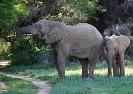 elephant-matriarch-calf-samara-private-game-reserve-karoo-south-africa- ida-hansen - You2Africa
