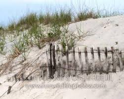 Sand Dune Old Fence Rwp 42912 7